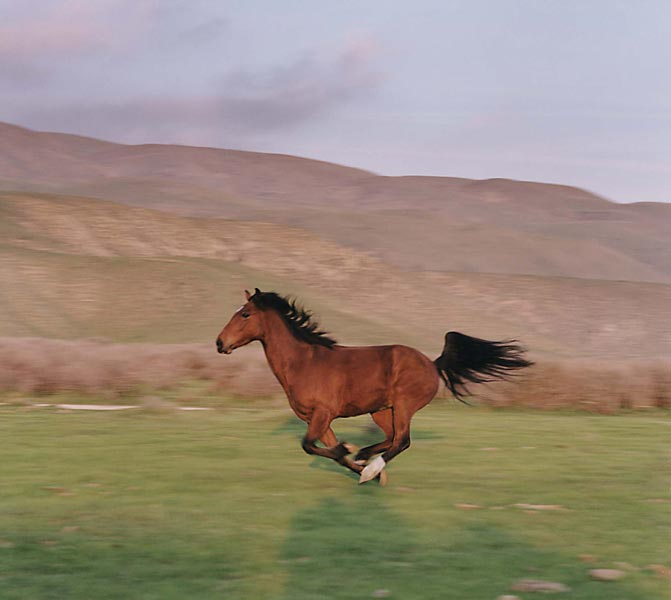 running_horse_big