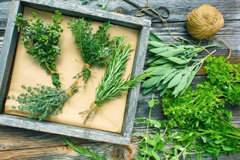 Liečivé byliny v najstarších mýtoch: archangelika, zemežlč i badián